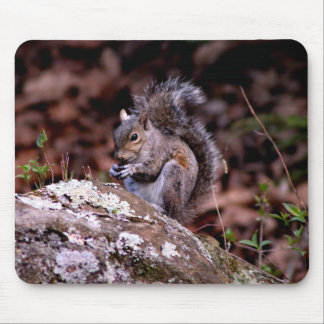 Squirrel enjoying His Meal Mouse Pad