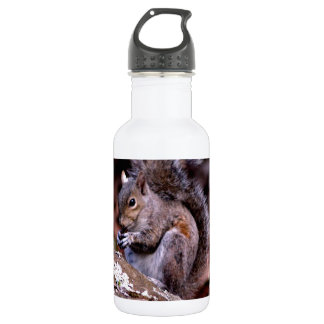 Squirrel enjoying His Meal Stainless Steel Water Bottle