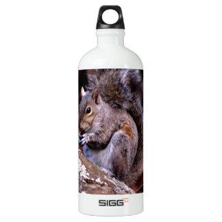 Squirrel enjoying His Meal Water Bottle