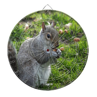 squirrel enjoying sweet and peace dartboards
