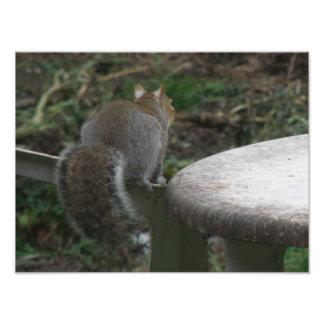 Squirrel Enjoying the View Photo Print