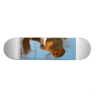 Squirrel Express Skate Board