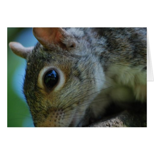Squirrel Face Greeting Card
