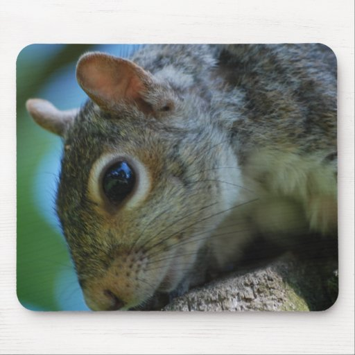 Squirrel Face Mouse Pad
