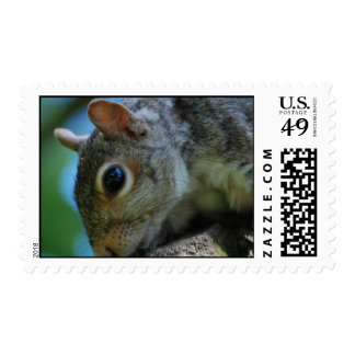 Squirrel Face Postage Stamp