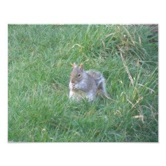 Squirrel Feasting Photo Print