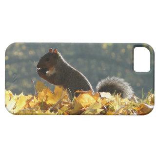 Squirrel Feeding iPhone SE/5/5s Case