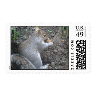 Squirrel Finds a Big Tasty Nut Postage Stamps