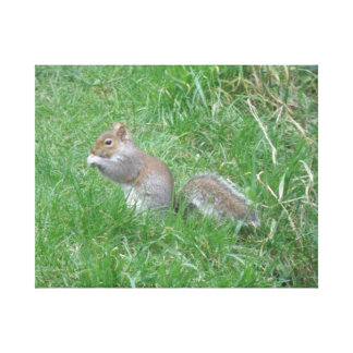 Squirrel Finds a Tasty Nut Canvas Print