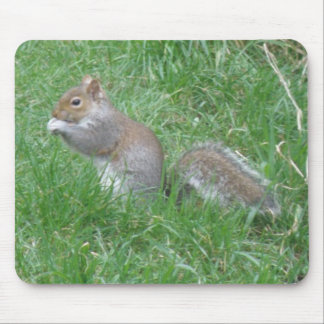 Squirrel Finds a Tasty Nut Mousepad