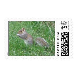 Squirrel Finds a Tasty Nut Postage Stamp