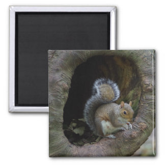 Squirrel Fridge Magnet