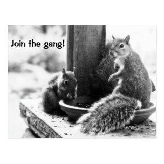 Squirrel Get-Together Postcard