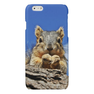Squirrel Glossy iPhone 6 Case