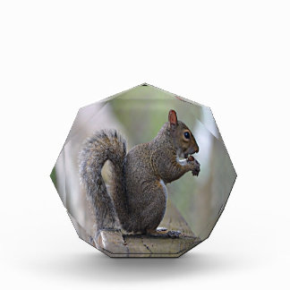 Squirrel (Grey) Acrylic Award