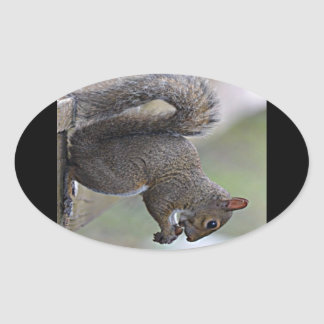 Squirrel (Grey) Oval Sticker