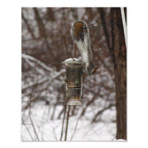 Squirrel Gymnastics Photo Art