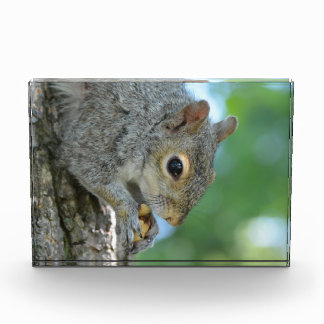 Squirrel Hanging in A Tree Award