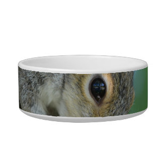 Squirrel Hanging in A Tree Bowl