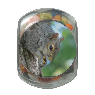 Squirrel Hanging in A Tree Glass Candy Jar
