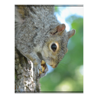 Squirrel Hanging in A Tree Letterhead