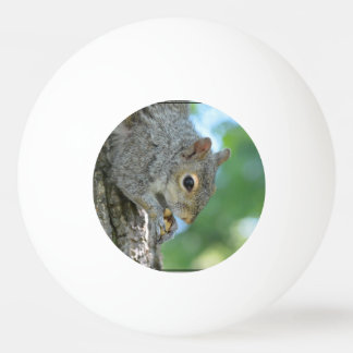 Squirrel Hanging in A Tree Ping-Pong Ball