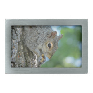 Squirrel Hanging in A Tree Rectangular Belt Buckle