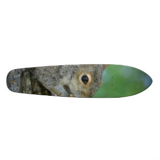 Squirrel Hanging in A Tree Skateboard Deck