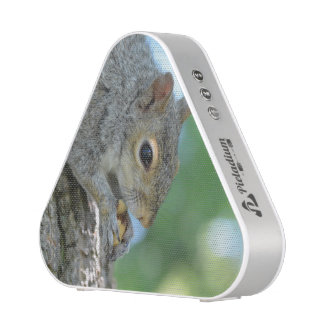 Squirrel Hanging in A Tree Speaker