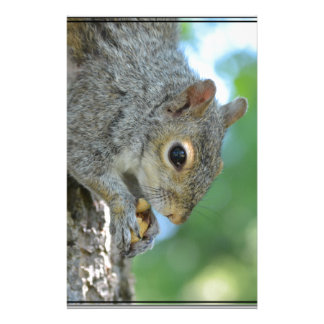 Squirrel Hanging in A Tree Stationery