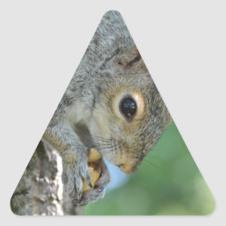 Squirrel Hanging in A Tree Triangle Sticker