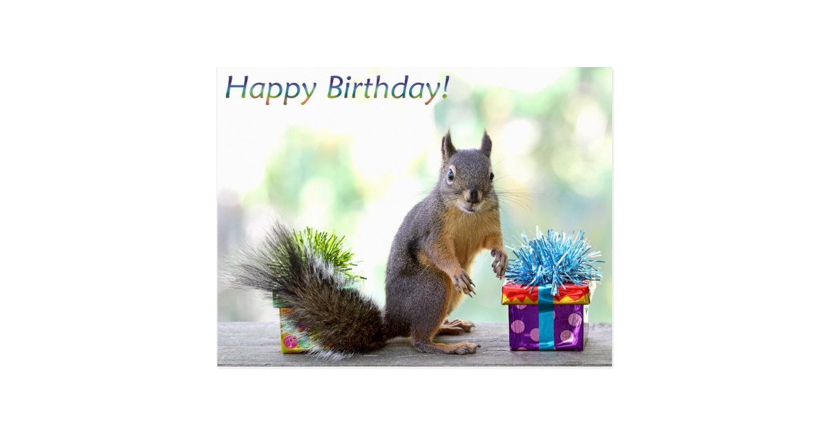Squirrel Happy Birthday Postcard Zazzle Com