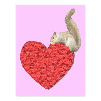 Squirrel Heart Pink Postcard