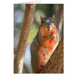 Squirrel Holding Cheese Puff Greeting Card,Note Ca Card