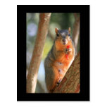 Squirrel Holding Cheese Puff Postcard