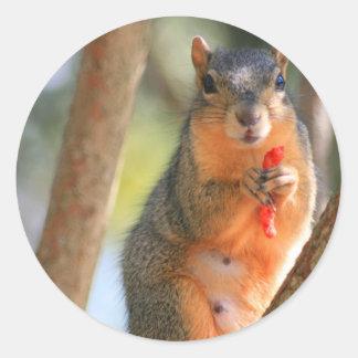 Squirrel Holding Cheese Puff Sticker