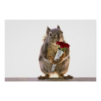 Squirrel Holding Red Rose Bouquet Poster
