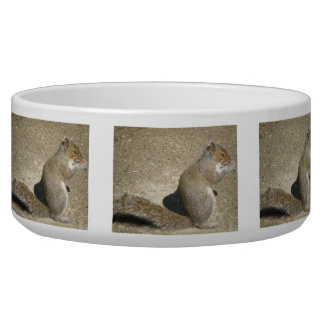 Squirrel Hungry Horatio Dog Bowl