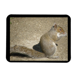 Squirrel Hungry Horatio Premium Magnet