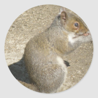Squirrel Hungry Horatio Sticker
