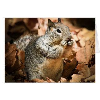 Squirrel II Cards