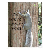Squirrel: I'm Nuts About You! Postcard