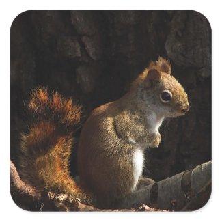 Squirrel in a Patch of Sun sticker
