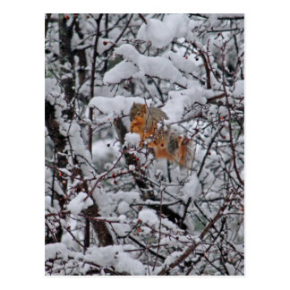 Squirrel in a Snowy Tree 6206 Postcard