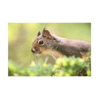Squirrel in a Tree Stretched Canvas Print