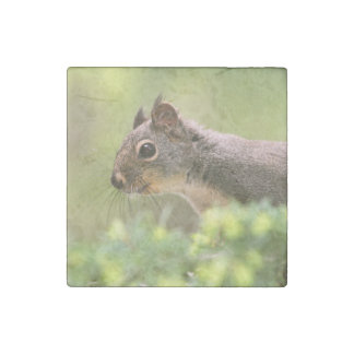Squirrel in a Tree Stone Magnet