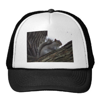 Squirrel in a Tree Hat