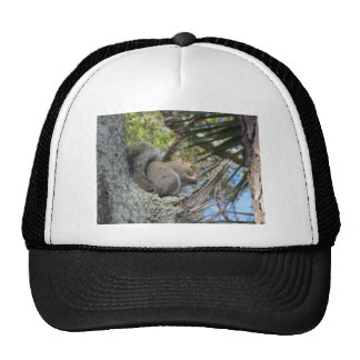 Squirrel in a Tree Mesh Hats