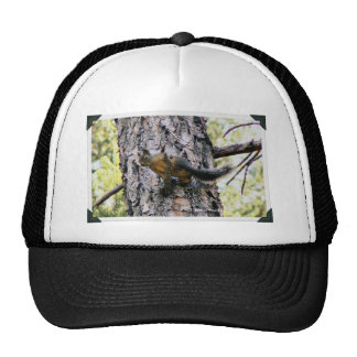 Squirrel In A Tree Hats