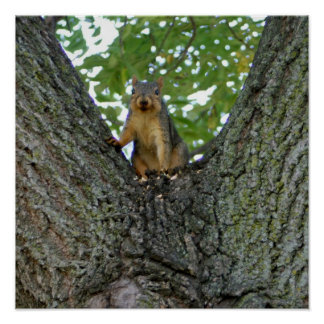 Squirrel in a tree Imaginative Imagery gifts Poster